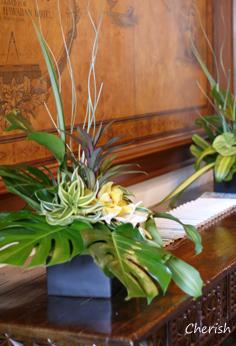 旅行記 「植物」_b0208604_5514829.jpg