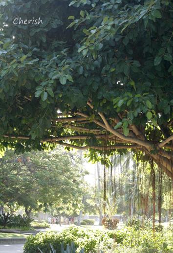 旅行記 「植物」_b0208604_5531712.jpg