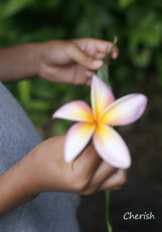 旅行記 「植物」_b0208604_5551229.jpg