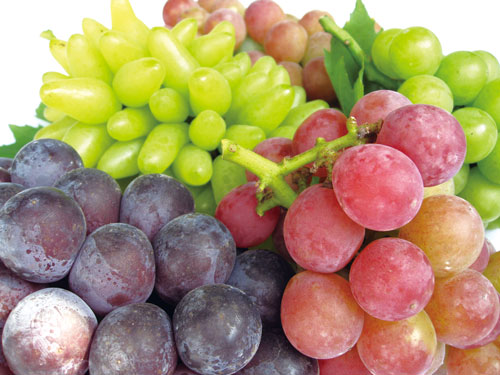 葡萄収穫祭「柿之屋の茶会」_f0225817_109061.jpg