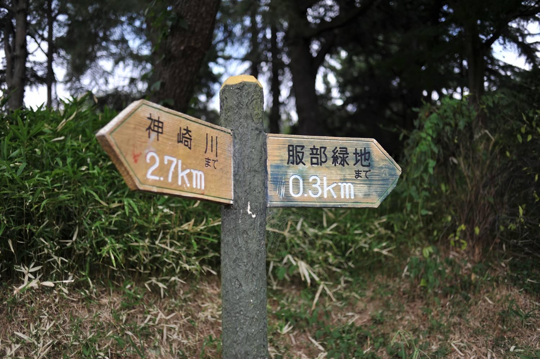 朝 服部緑地へ_b0069128_15351482.jpg