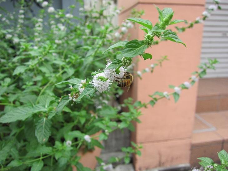 ハチミツの日がありました_d0155439_20573977.jpg