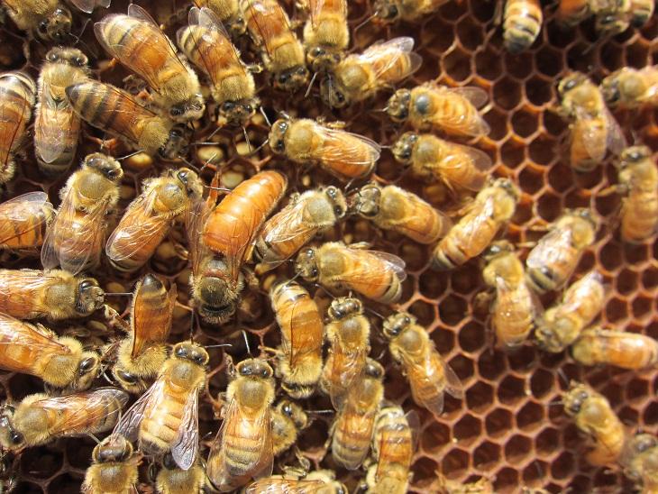 ハチミツの日がありました_d0155439_20593819.jpg