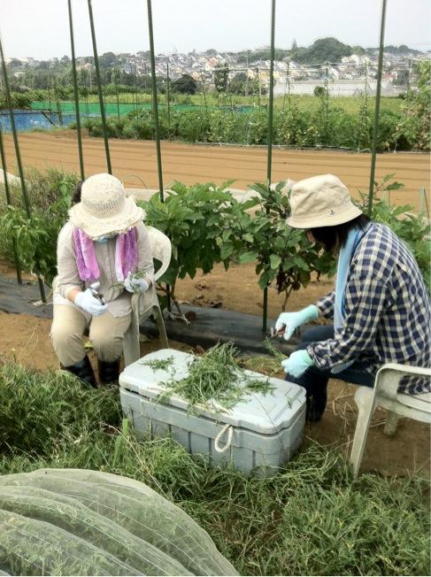 冬野菜の苗床&バジリコに給水です_c0222448_13373154.jpg