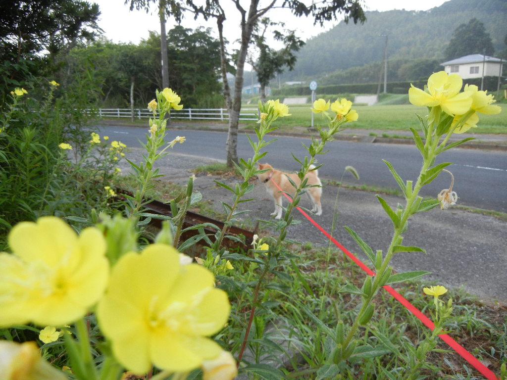 2011年8月13日(土)愛ちゃんの受難!_f0060461_12561094.jpg