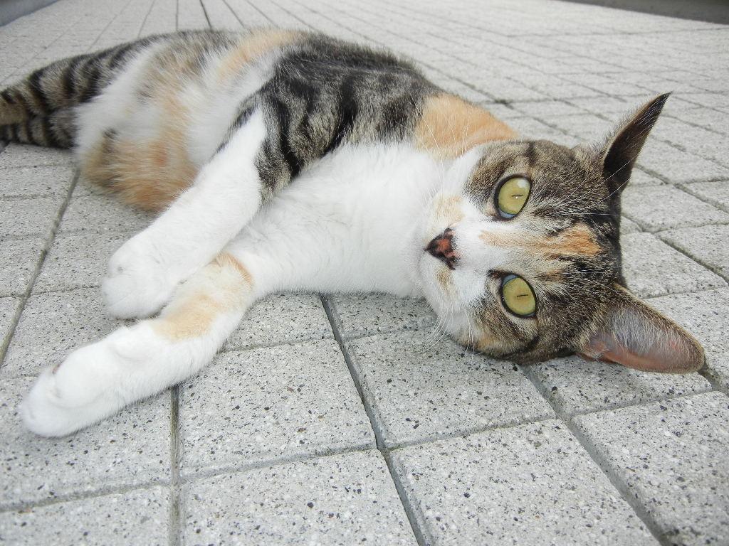 2011年8月13日(土)愛ちゃんの受難!_f0060461_13322538.jpg