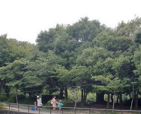 2011年浜松④ 浜松城公園_b0018885_7405892.jpg