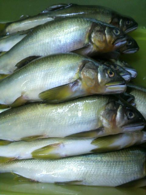 今日の魚は_e0183396_17193060.jpg