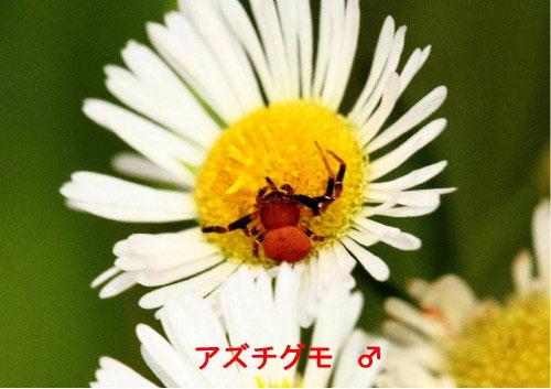 b0025008_184476.jpg