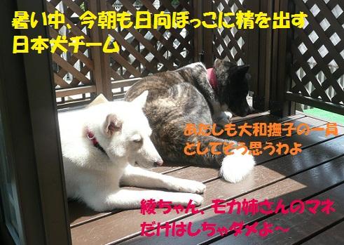 f0121712_1611064.jpg