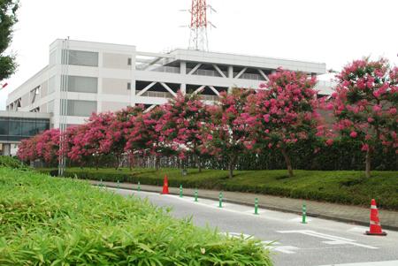 夏の花散歩 2011_d0113613_1212324.jpg