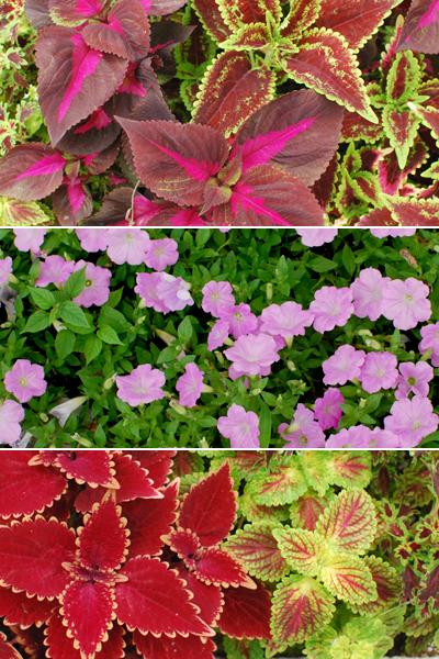 夏の花散歩 2011_d0113613_12274827.jpg