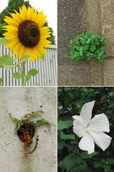 夏の花散歩 2011_d0113613_12294488.jpg