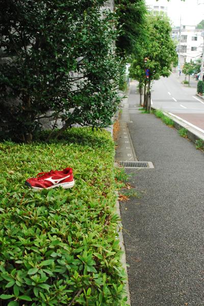 夏の花散歩 2011_d0113613_12335313.jpg