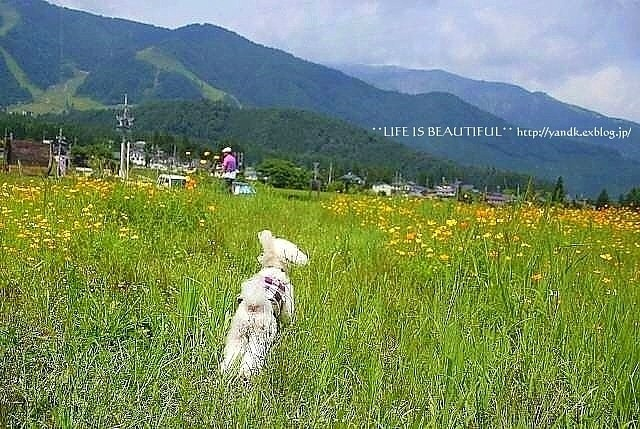 夏休み旅行2011①_d0083623_16243614.jpg