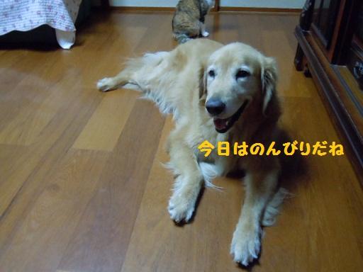 f0114128_62738100.jpg