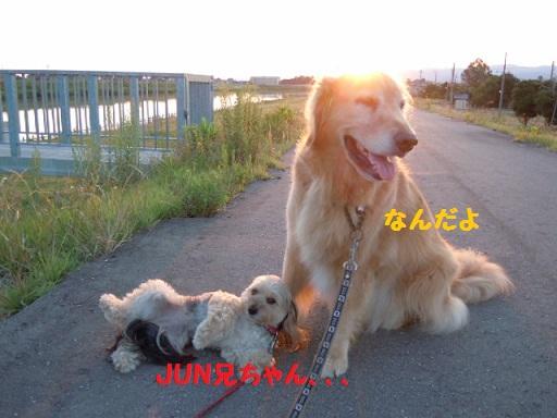f0114128_6391362.jpg