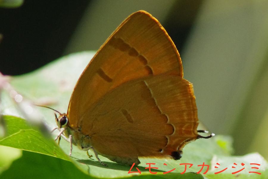 b0144049_15301978.jpg