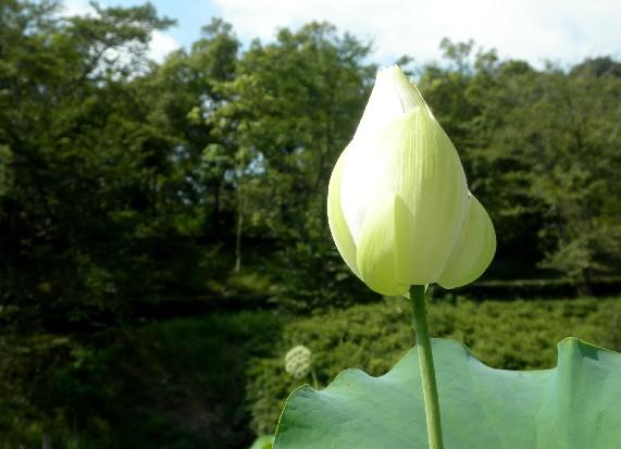 和歌山県植物公園緑花センター _b0093754_23404786.jpg