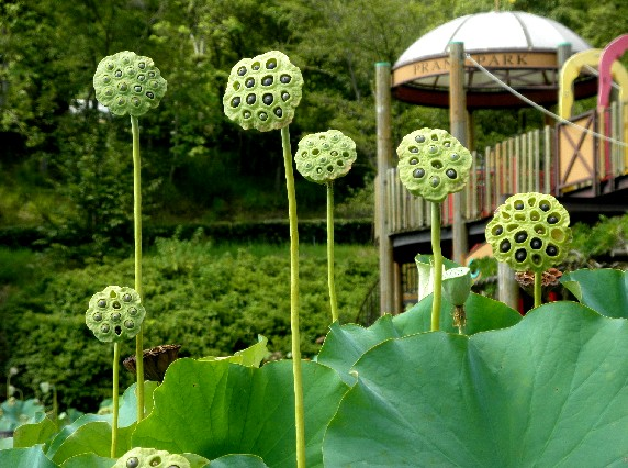 和歌山県植物公園緑花センター _b0093754_234132.jpg