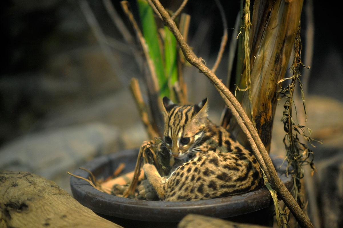 真夏の夜の動物園_b0023856_7481323.jpg