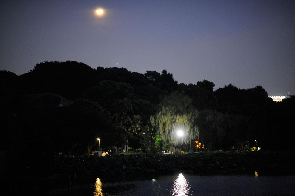 真夏の夜の動物園_b0023856_7503184.jpg