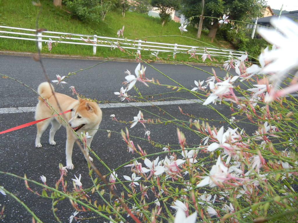 2011年8月14日(日)勝浦でも、猛暑!猛暑!猛暑!_f0060461_1128088.jpg