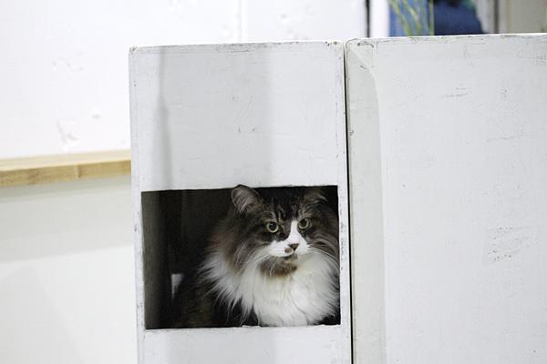 スタジオ猫_a0002672_19485875.jpg