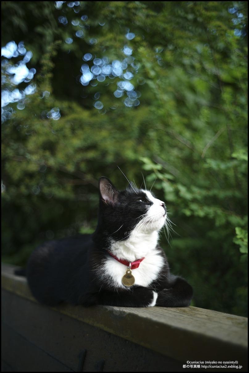 エドモントンの猫_f0042194_010589.jpg