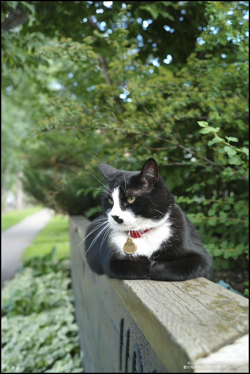 エドモントンの猫_f0042194_0111177.jpg