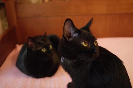 ごめんにゃすって猫 しぇるのぇるろった編。_a0143140_2227362.jpg