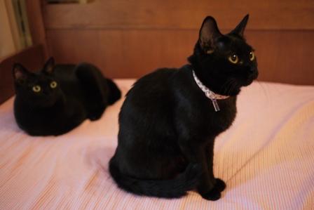 ごめんにゃすって猫 しぇるのぇるろった編。_a0143140_22291279.jpg