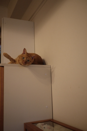 ごめんにゃすって猫 しぇるのぇるろった編。_a0143140_22301292.jpg