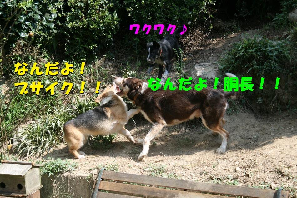 d0077740_20252185.jpg