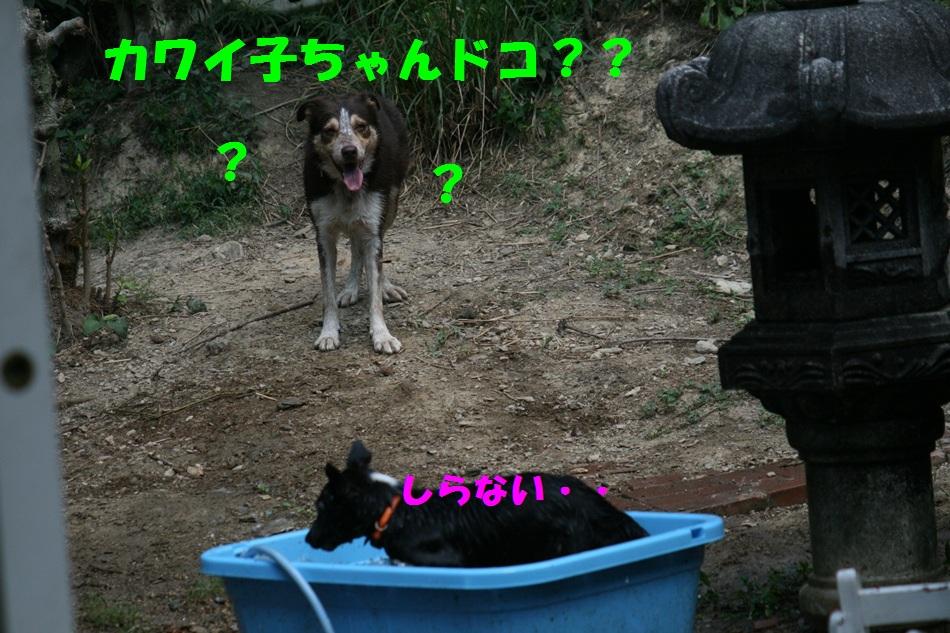 d0077740_22104450.jpg