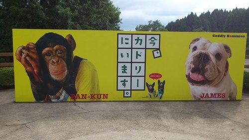 熊本なう!_c0206243_9245463.jpg