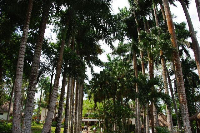 【メキシコ】 マヤ・ランドホテルへ戻り、休憩とランチ_c0011649_21593978.jpg