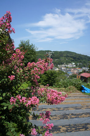 東マユミ個展「楽園」 北鎌倉 GALLERY NEST_f0117059_2127246.jpg