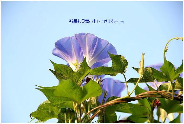 d0142669_1614717.jpg