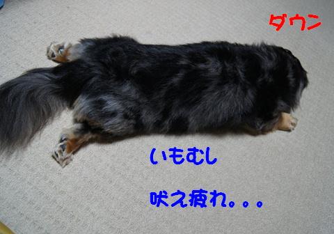 f0195891_20405158.jpg