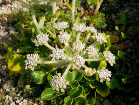 この夏の収穫は、ミニトマトと小さなニンニク^^_a0136293_16412368.jpg