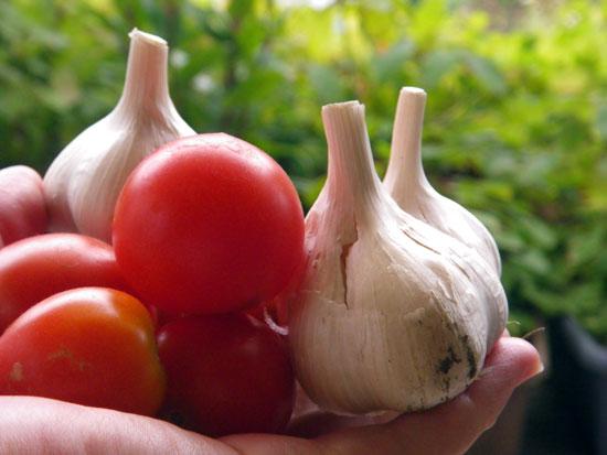 この夏の収穫は、ミニトマトと小さなニンニク^^_a0136293_16443981.jpg