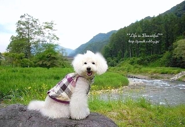 夏休み旅行2011②_d0083623_23164530.jpg