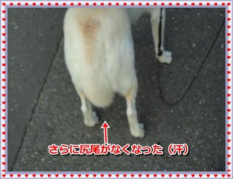 f0195543_2114514.jpg