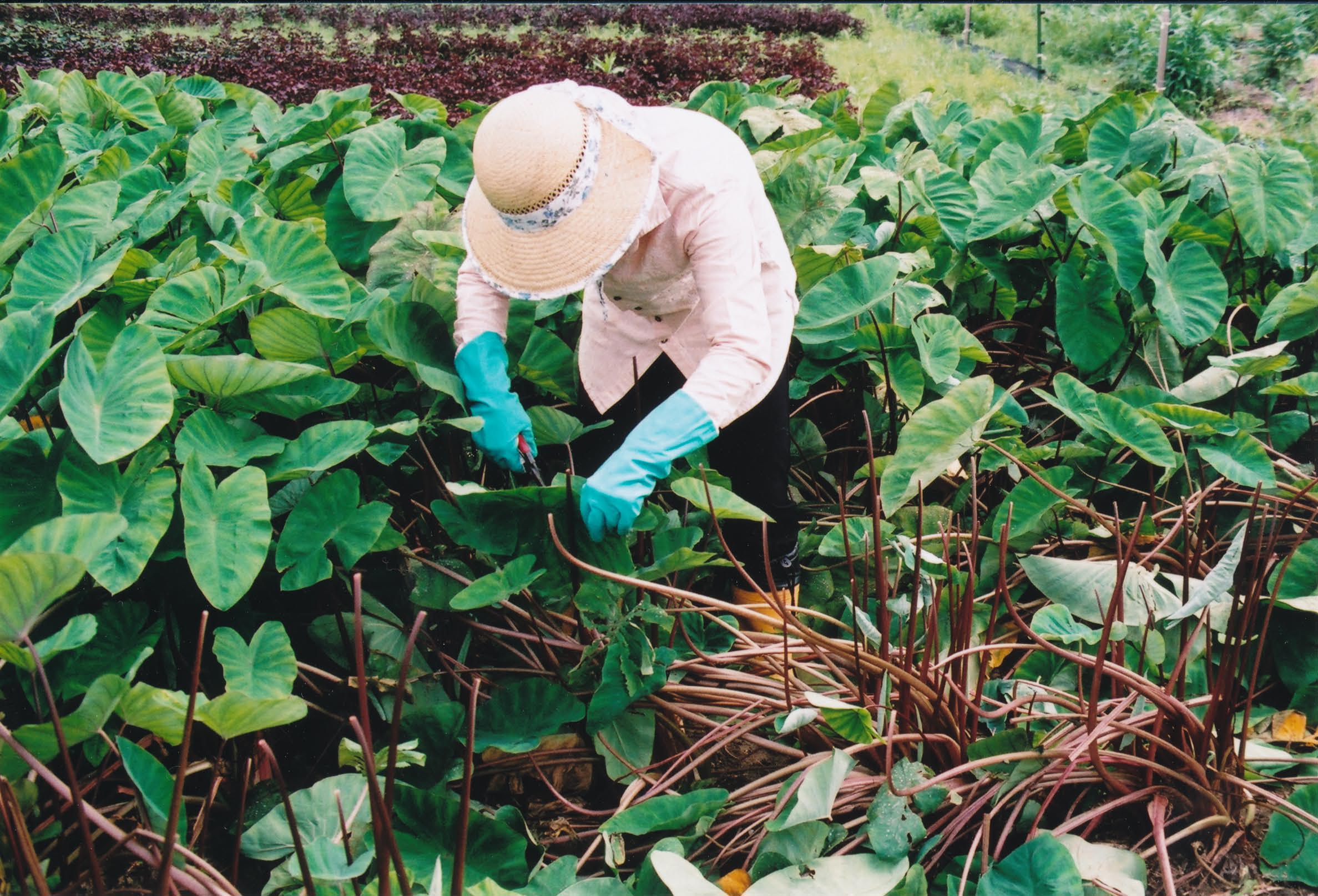 ごんべえ畑の収穫祭☆その2_e0156251_0295867.jpg