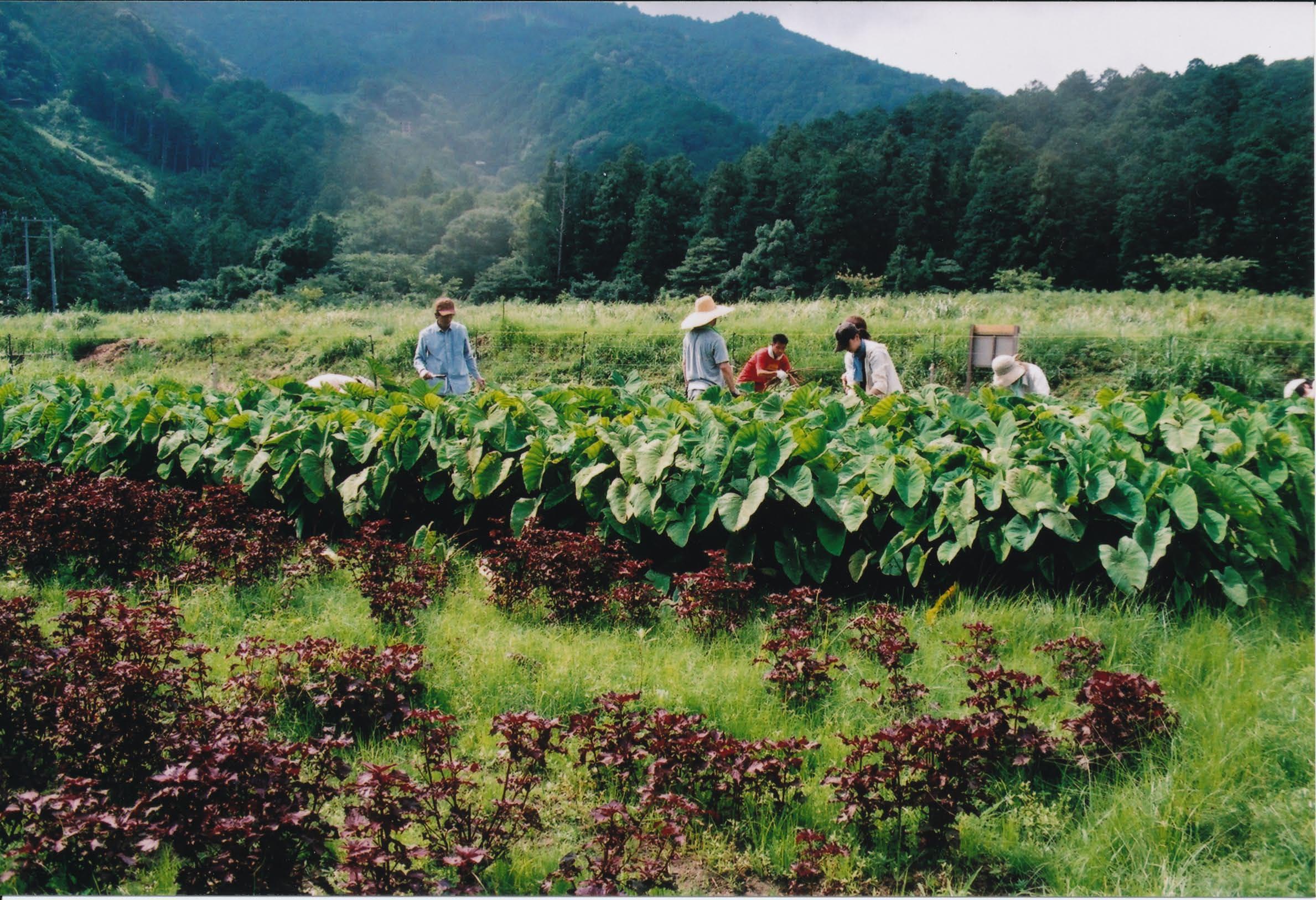 ごんべえ畑の収穫祭☆その2_e0156251_0364616.jpg