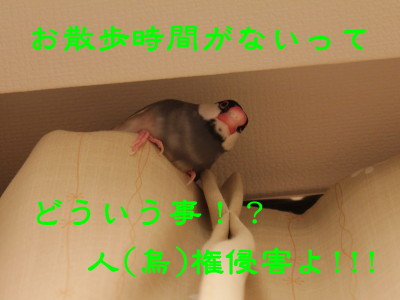 b0158061_21461847.jpg
