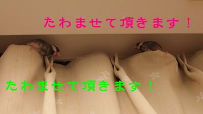 b0158061_2146310.jpg