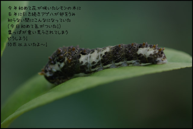 b0019313_17465178.jpg