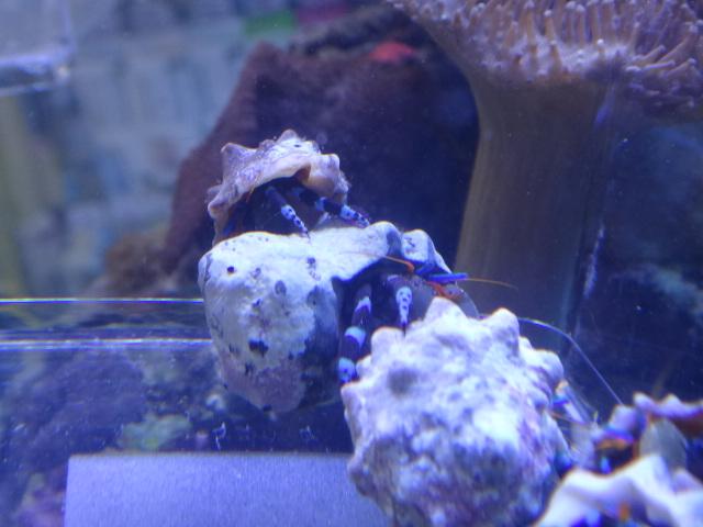 海水魚・サンゴ・水草・淡水魚_f0189122_13131778.jpg